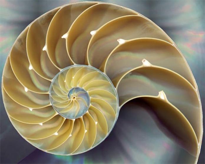 shell - intergalactic godsend